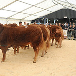 Newark Limousin Day April 12th 2014